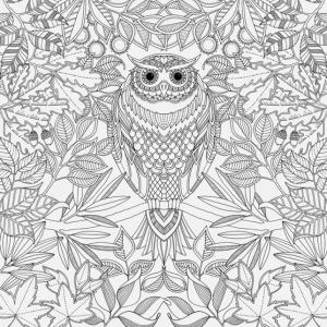 ilustracao-para-colorir-de-jardim-encantado-de-johanna-basford-1430775509831_557x557
